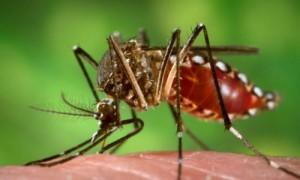 मौसमी बुखार कहीं बन न जाये डेंगू