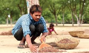 नीम: वैश्विक समस्याओं को सुलझाने वाला पेड़