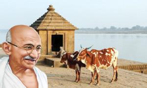 गाय और गांधीजी का दृष्टिकोण