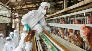 केन्द्र ने राज्यों से एवियन एन्फ्लुजा के लक्षणों का पता लगाने के लिए पक्षियों पर निगरानी रखने को कहा